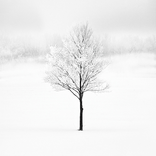 Winter Tree #9