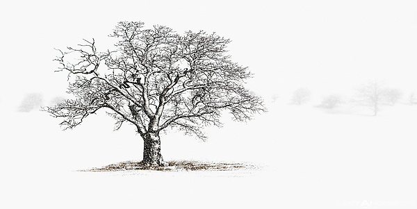 Winter Tree #6