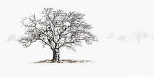 Winter Tree #6 by Matt Anderson (Black & White Photograph)