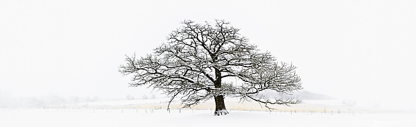 Winter Tree #1