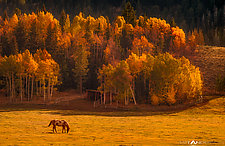 Gros Ventre Ranch Sunset by Matt Anderson (Color Photograph)