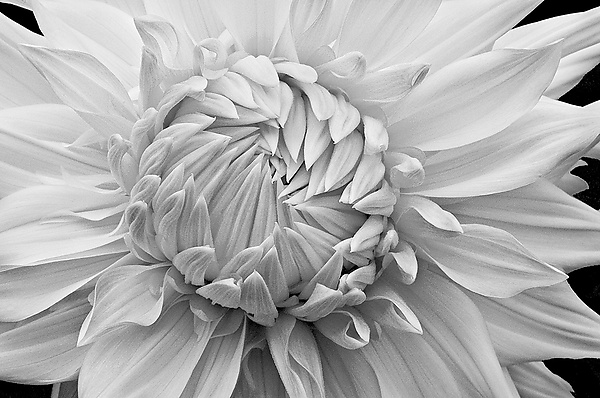 Overlapping Petals