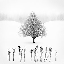Winter Tree #13 by Matt Anderson (Black & White Photograph)