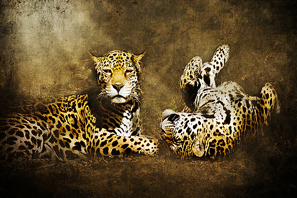 Jaguar Love