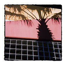 Pink Floyd Palm by Marcia Treiger (Color Photograph)