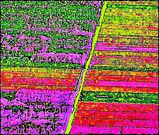 Tulip Fields by James Robison (Color Photograph)