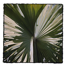 Palm Trees by Marcia Treiger (Color Photograph)
