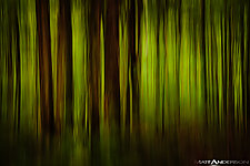 Forest in Motion by Matt Anderson (Color Photograph)