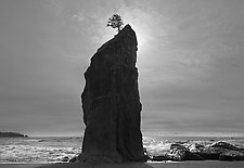 Stand Alone by Joseph Hyde (Black & White Photograph)