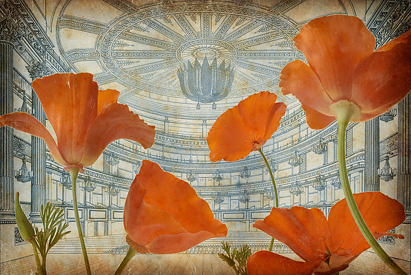 Theater of Poppies 2