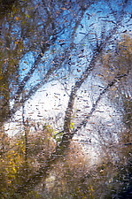 Meeting of Water and Woods 1 by Thea Schrack (Color Photograph)