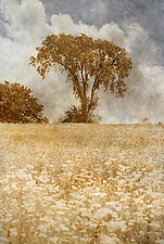 Meadow by Thea Schrack (Color Photograph)